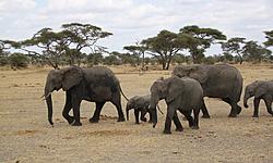 BABYLON5, voyage en Tanzanie