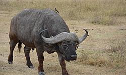 cyrille14, voyage en Tanzanie