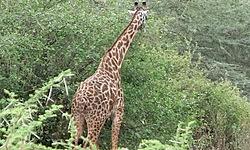 , voyage en Tanzanie