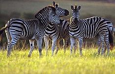 Les incontournables de la Tanzanie en groupe