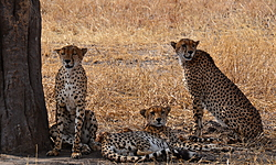 cocofilou, voyage en Tanzanie