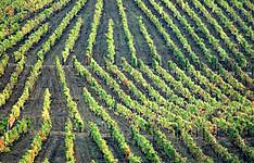 La découverte des vins