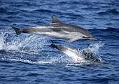 Jour 5 - Rencontre avec les dauphins