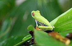 A la rencontre de la faune et de la flore : Toucan, quetzal et ara ...