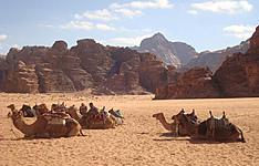 Randonnée chamelière dans le Wadi Rum et Pétra