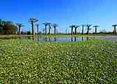Madagascar! Voyage au pays des lémuriens en famille