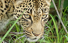 Out of Africa : safari et nuits en tented camps