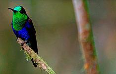 Voyage naturaliste sur les néo-tropiques