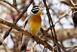 Oiseaux en Ethiopie
