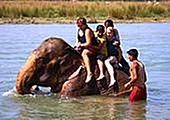 Jour 7 - Canoë, balade à dos d\'éléphant et randonnée pédestre au parc de Chitwan