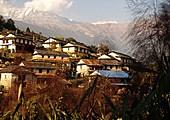 Jour 11 - De Landruk (1750 m) à Ghandruk (1950 m)